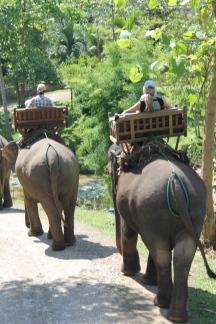 Elephants Luang Prabang