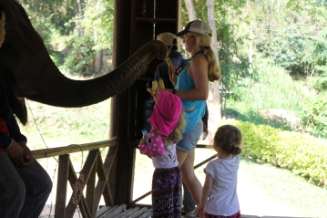 Elephant Trunk Luang Prabang
